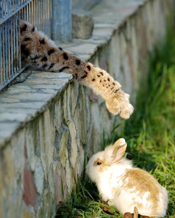 Животных не гладить Фотография, Кот, Кролик, Животные, Милота
