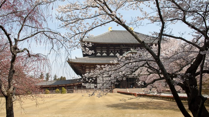 Сакура и не только Япония, Сакура, Весна, Токио, Длиннопост