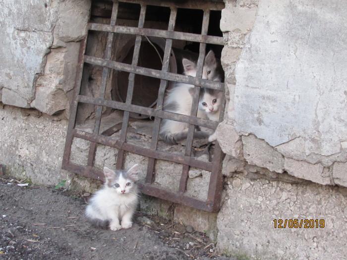 Весна. Котейки. Котята, Самара, Подвал, Весна, Кот