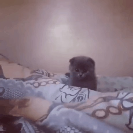 Котенок-охотник.