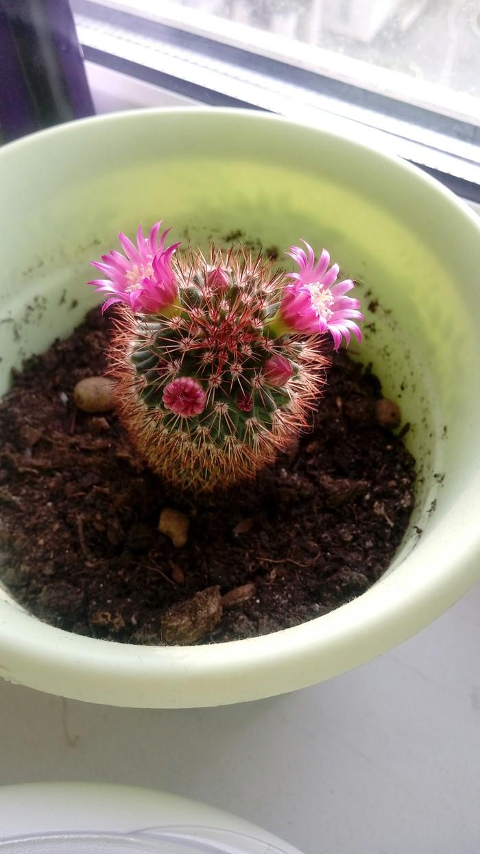 На кактусной волне Кактус, Цветы, Фотография, Длиннопост
