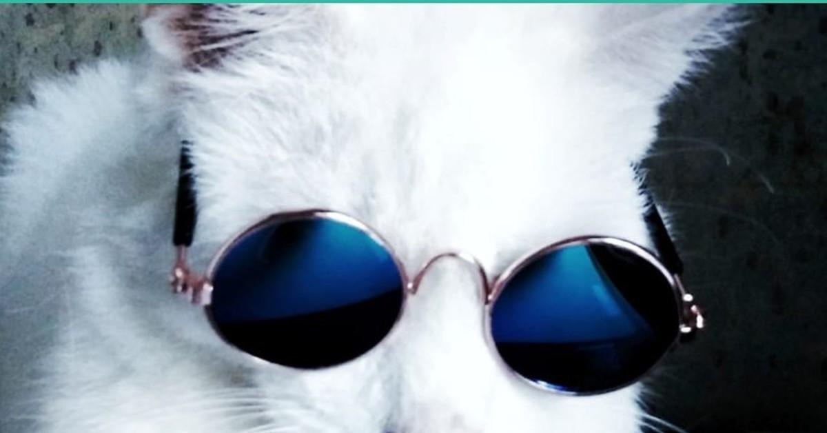 Картинка кот в очках лепс на телефон