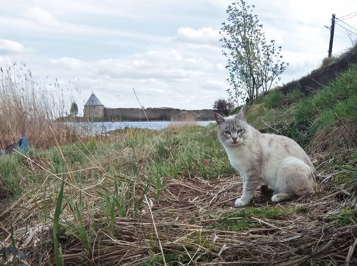 Шлиссельбургский кот Кот, Крепость, Шлиссельбург, Фотография