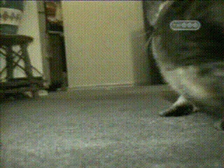 Кот, палочка и рука