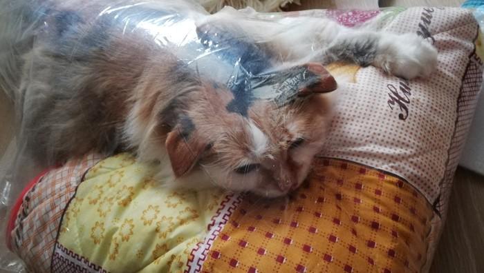 Пакетированная кошка Котомафия, Пакет, Кот