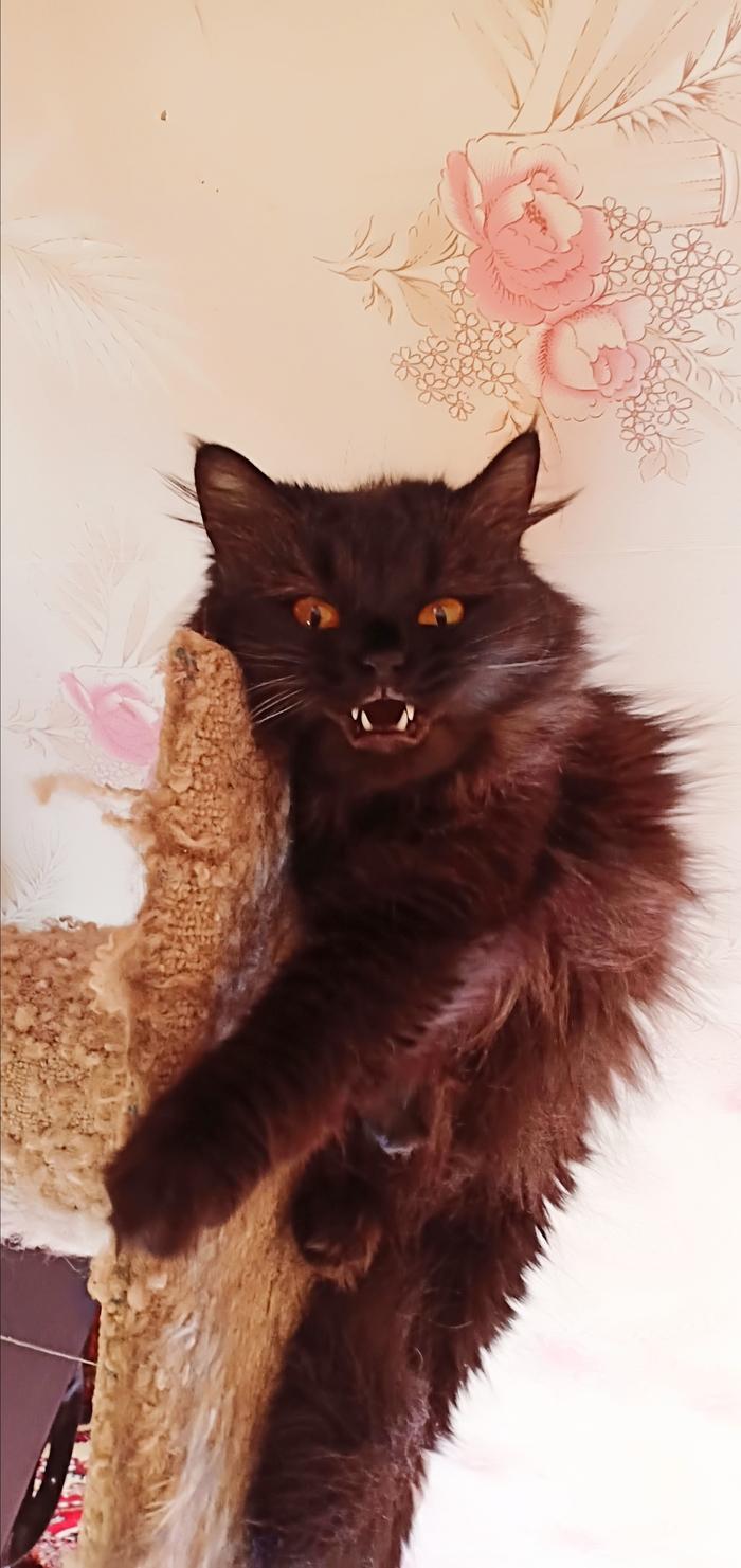Парадокс.... Кошкиспас, Сотрясение мозга, Парадокс, Длиннопост, Кот