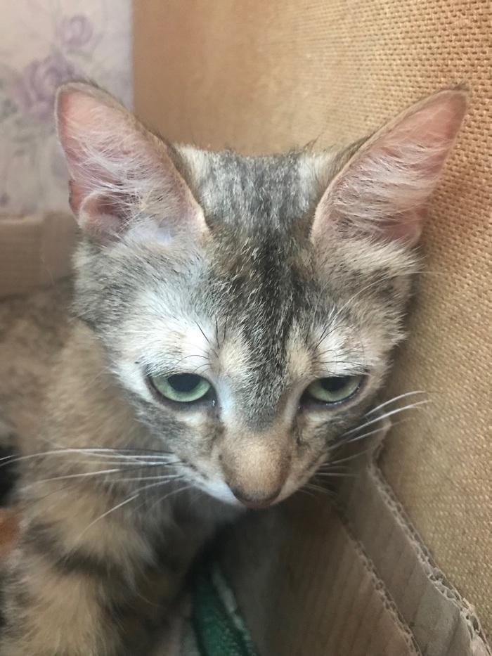 Котята ищут дом Санкт-Петербург, В добрые руки, Кот, Котята, Без рейтинга, Ищу дом, Помощь животным, Длиннопост