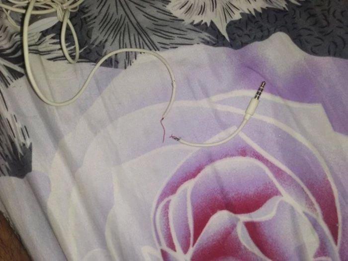 В Индонезии котейка перегрызла кабель от наушников. Животное отругали, и оно принесло необычную замену. Индонезия, Кот, Фотография, Длиннопост, Змея, Наушники