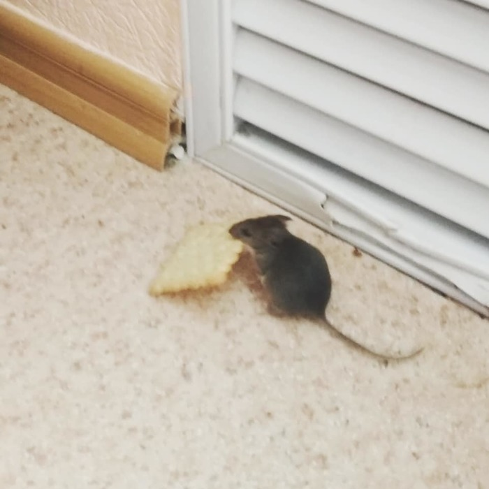 О_о пичинюха! Мышь, Печенье, Длиннопост
