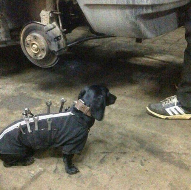 Собака-подавака Автосервис, Собака, Юмор, Прикол, Баян