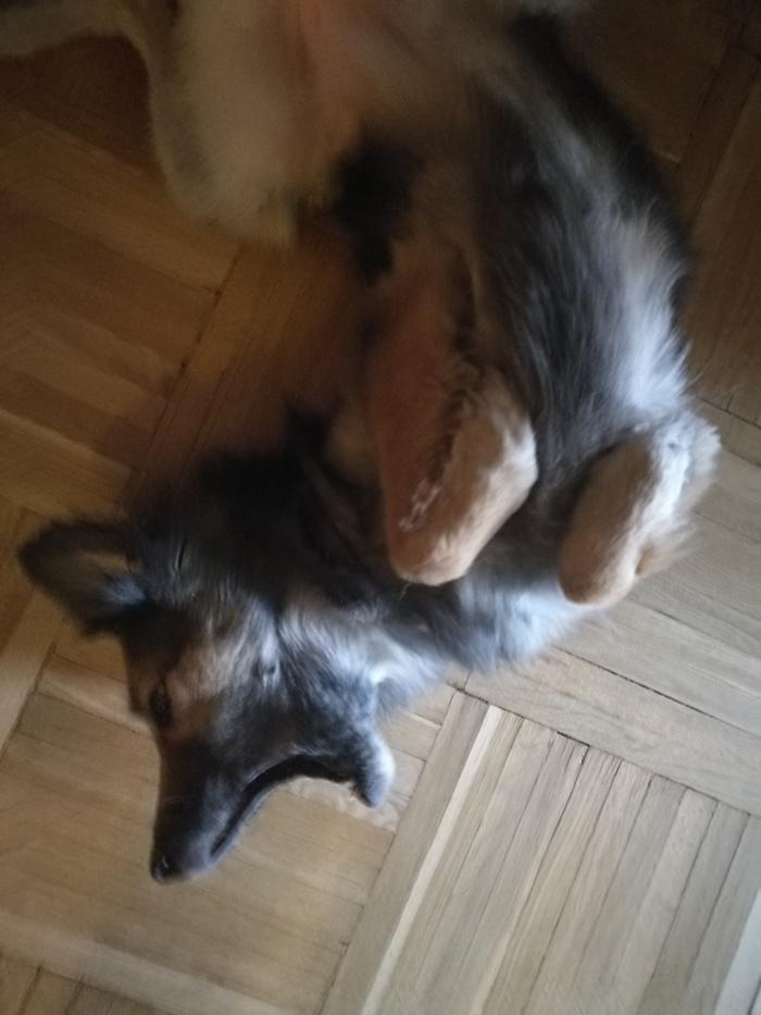 Собачень ищет дом Ищу дом, Санкт-Петербург, Собака, В добрые руки, Без рейтинга, Длиннопост, Животные