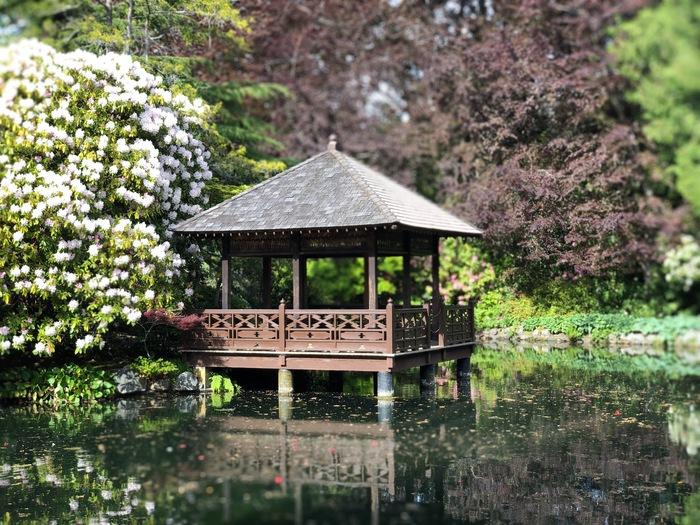 Парк, где РПЦ никогда не поставит храм. Парк, Замок, Цветы, Пруд, Гусь, Канада, Дерево, Длиннопост, Кролик