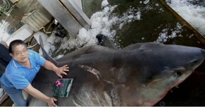 10 больших белых акул, которые появились явно не вовремя Трагедия, Истории, Акула, Животные, Видео, Длиннопост