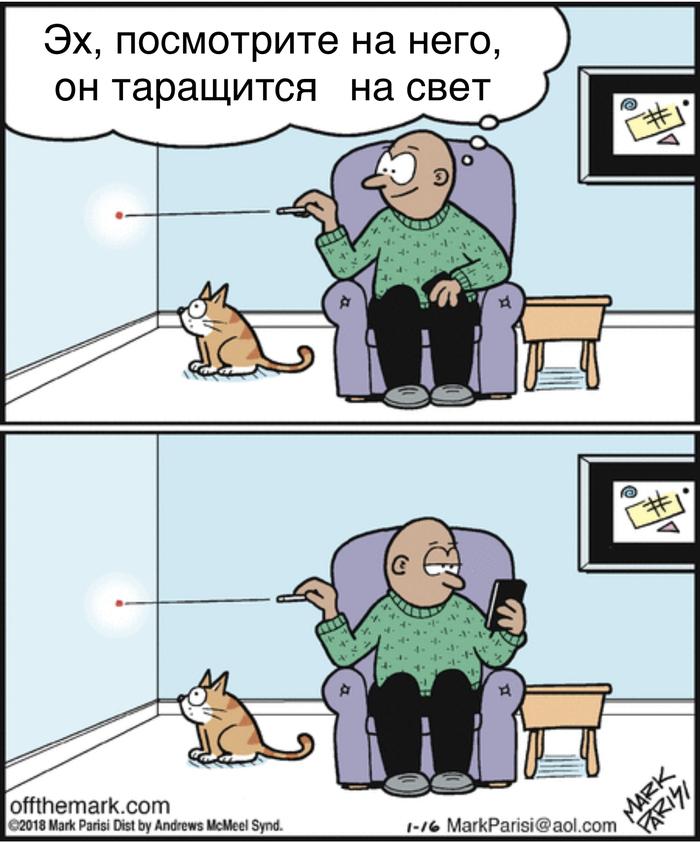Глупенький котик