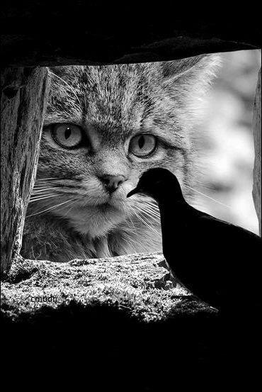 Привет птичка. Пойдем гулять?