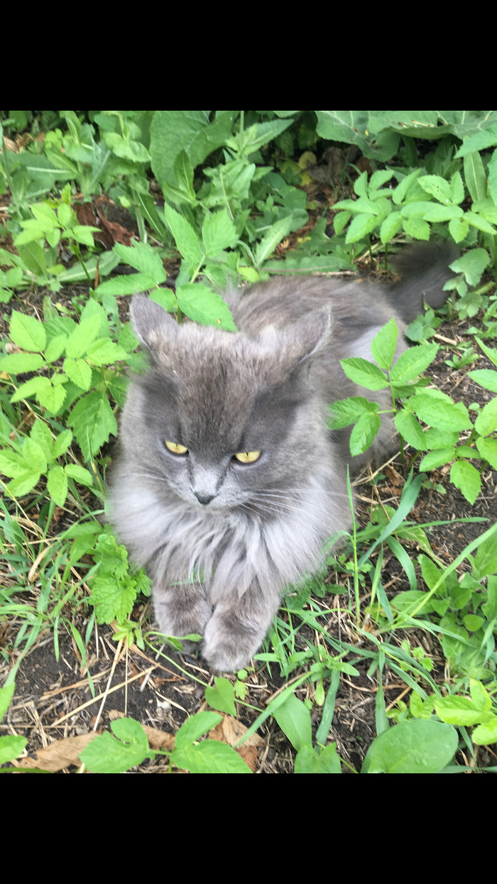 Кошачий привет мур