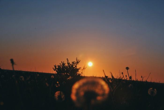 Скоро лето :) Природа, Фотография, Nikon, Закат, Одуванчик