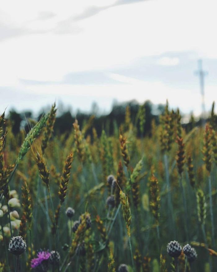 Выйду в поле.. Природа, Поле, Родные просторы, Фотография, Nikon, Длиннопост