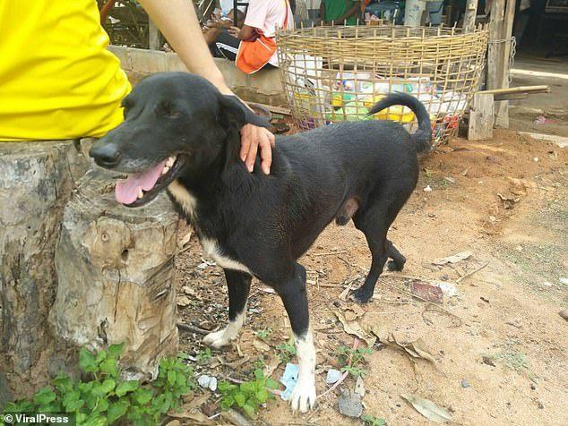 В Таиланде собака спасла заживо похороненного младенца, пишут СМИ Таиланд, Младенцы, Дети, Спасение, Домашние животные, Риа Новости, Собака, Общество, Видео, Длиннопост