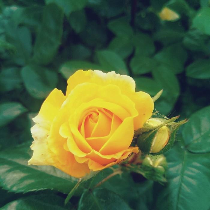 Просто фото и чуток фильтров) Фотография, Цветы, Бабочка, Длиннопост