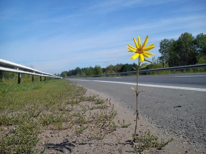 Гордо и сильно Цветы, Дорога, Обочина, Велопрогулка, Фотография