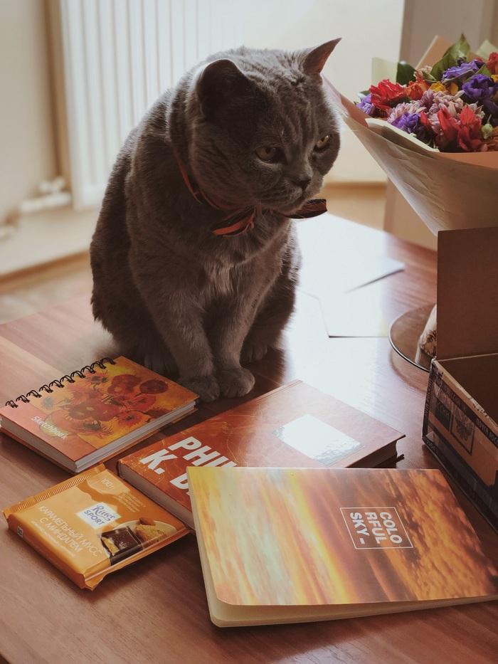Цвет настроения: янтарный Отчет по обмену подарками, Обмен подарками, Кот, Длиннопост