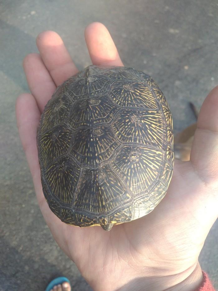 Черепах v2 Черепаха, Природа, Длиннопост