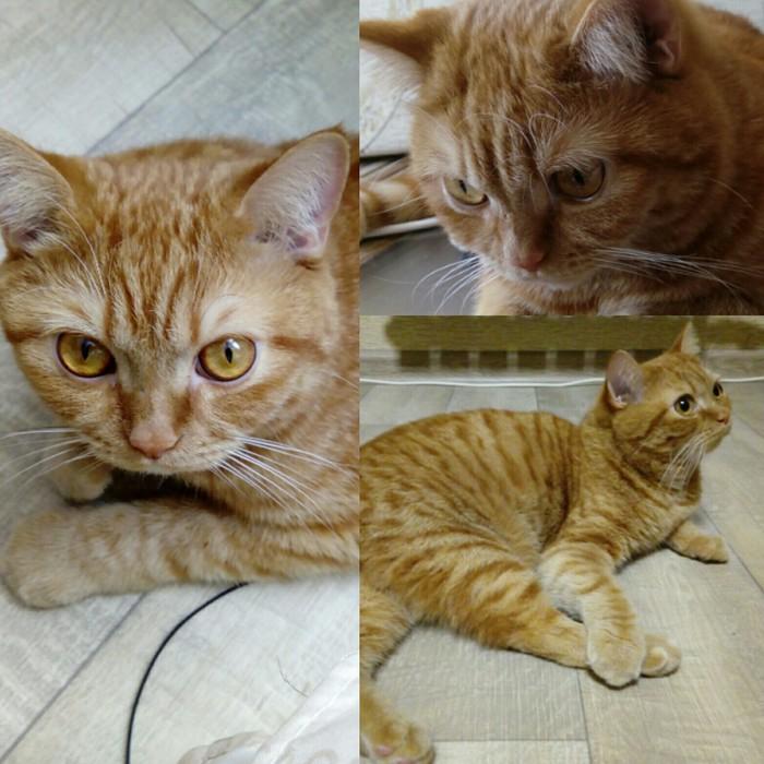 Потерялся кот Без рейтинга, Кот, Оренбург, Потерялся кот, Помогите найти
