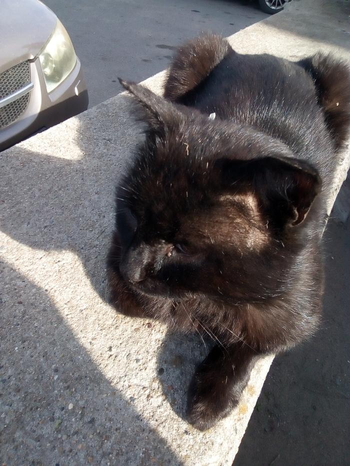 Пыльный кот из Троицка 2 Кот, Одиночество, Помощь, Длиннопост