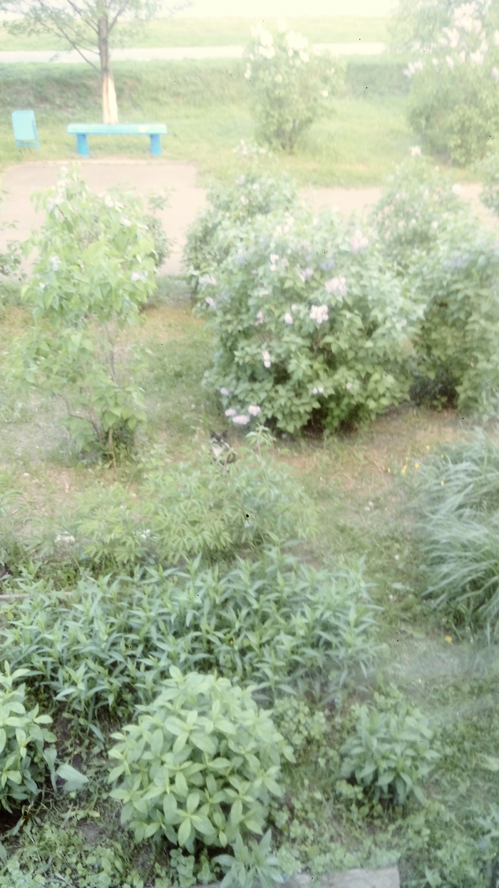 Котенок в траве Кот, Трава, Природа