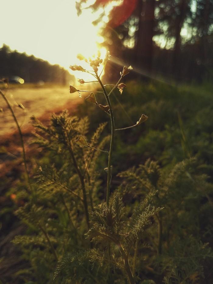 На закате Фотография, Природа, Мобильная фотография, Длиннопост