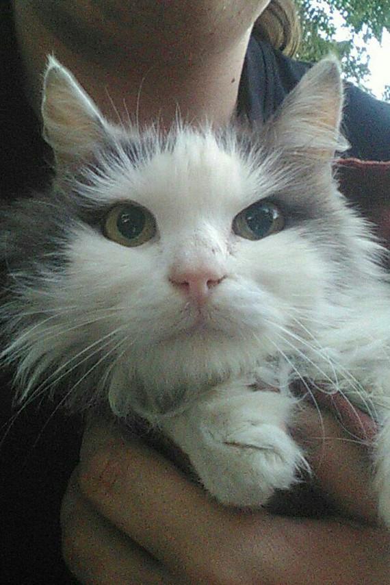 Нужны заботливые руки, Днепр. Днепр, Трехцветная кошка, Без рейтинга, В добрые руки, Кот
