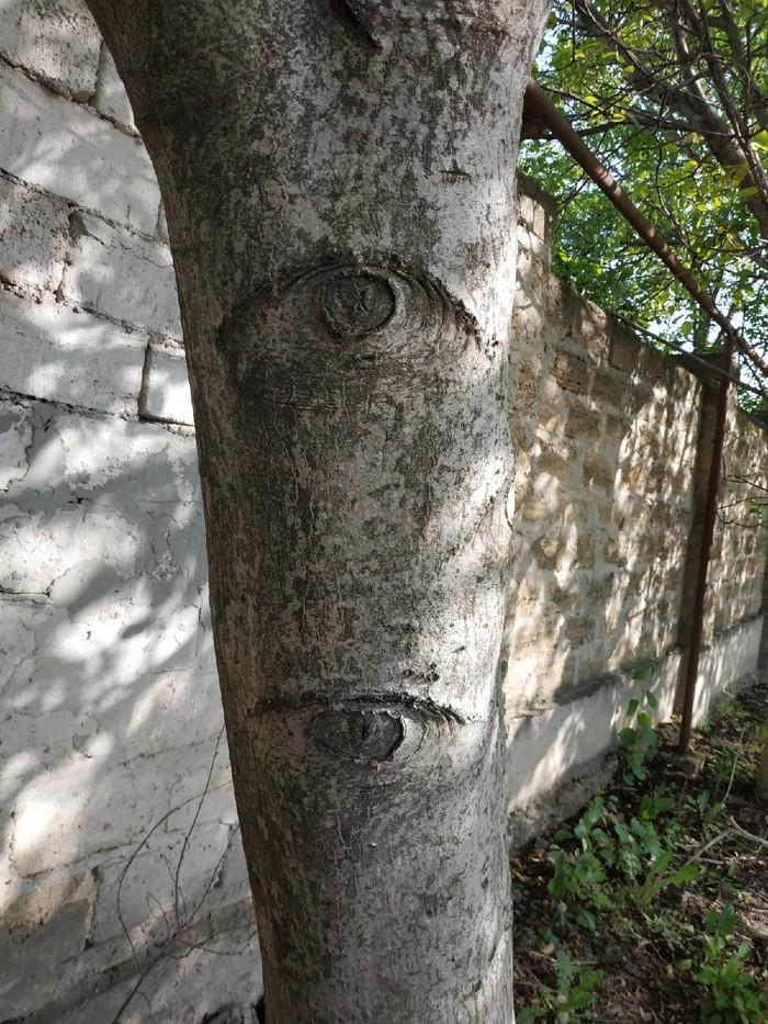Просто глазастое дерево