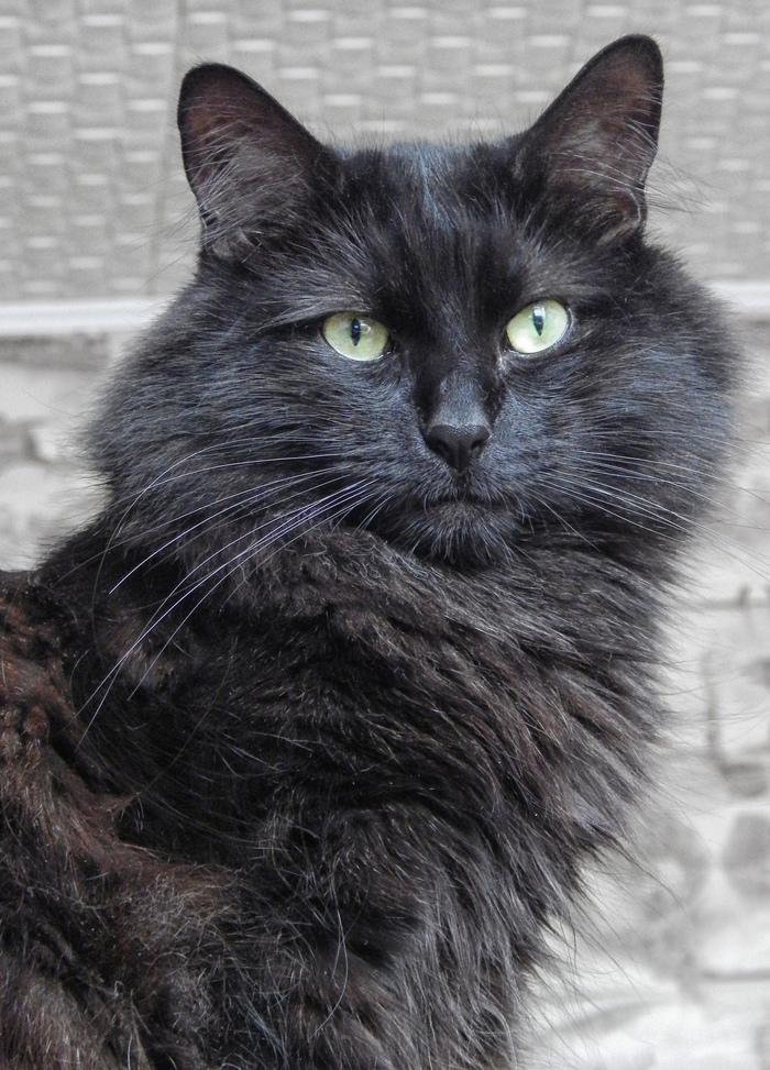 Его Котейшество Кот, Котомафия, Черный кот, Руфус