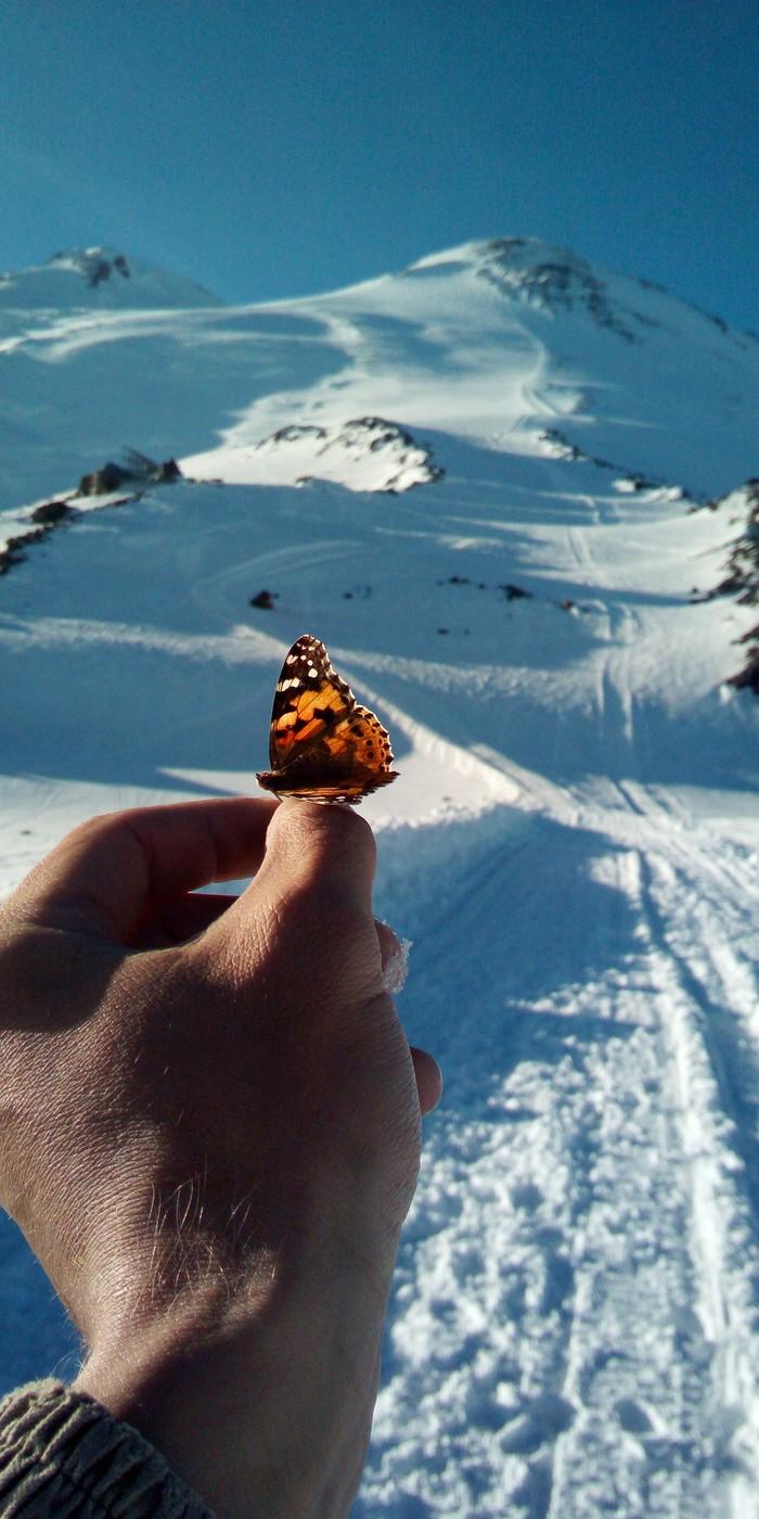 Высота 3900 ,Эльбрус Эльбрус, Горы, Путешествия, Фотография, Бабочка