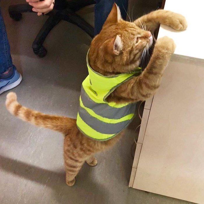 В Лахта Центре появился рыжий мяучный сотрудник Лахта-Центр, Кот, Рыжий кот Фокс, Фокс, Питомец, Строители, Длиннопост