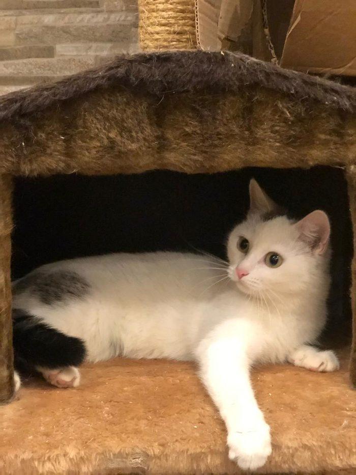 Кошка Глюкоза ищет новый дом!!! Кот, Москва, В добрые руки, Кошка Глюкоза, Подари дом, Длиннопост, Без рейтинга