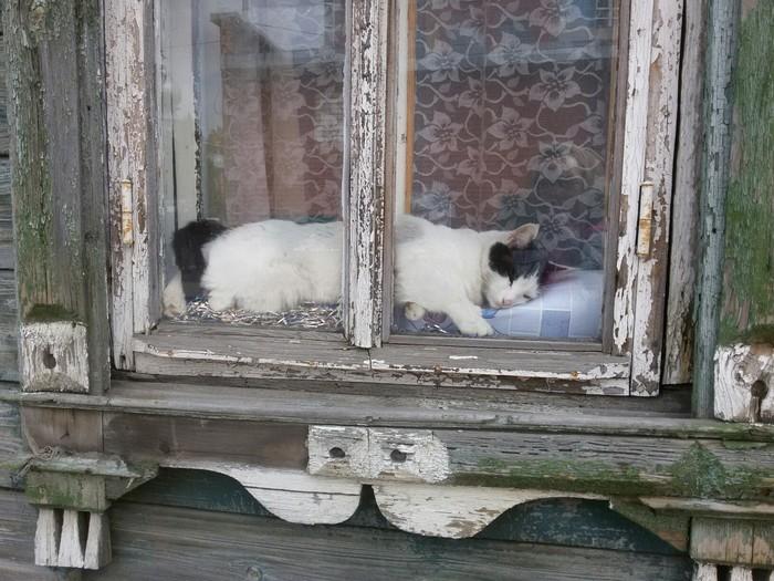 Полуденный отдых Кот, Деревня, Отдых, Окно