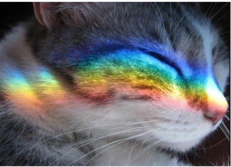 Куда уходят кошки.... Кот, Стихи, Грусть