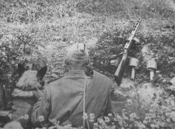 Советский солдат в окопе с собакой — истребителем танков Великая Отечественная война, История, Фотограф