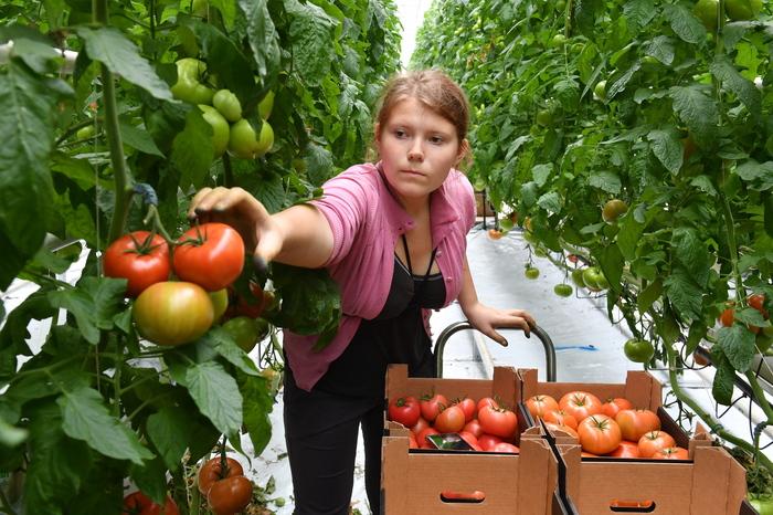 Переход к земледелию отнял у нас время на отдых. Особенно страдают женщины Наука, Прогресс, Земледелие, Ученые, Длиннопост