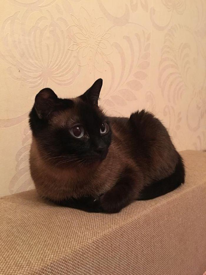 Пропала кошка Санкт-Петербург, Пропажа, Потерялся кот, Кот, Помощь, Без рейтинга, Котомафия