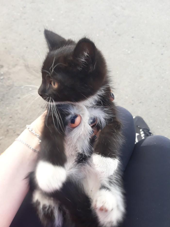 Найден кот [Хозяин найден] Без рейтинга, Кот, Санкт-Петербург, Найден кот, Помощь