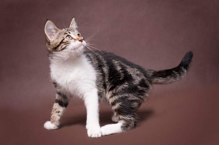 Пополнение семейства Кот, Коты и собаки вместе, Котята, Дружба, Домашние животные, Длиннопост