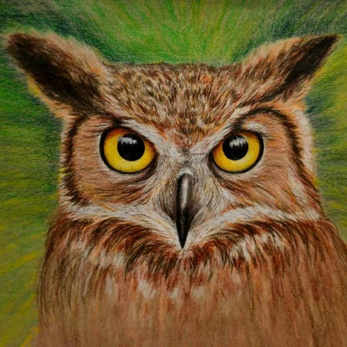 Сова Сова, Рисунок карандашом, Рисунок, Цветные карандаши, Птицы, Анималистика