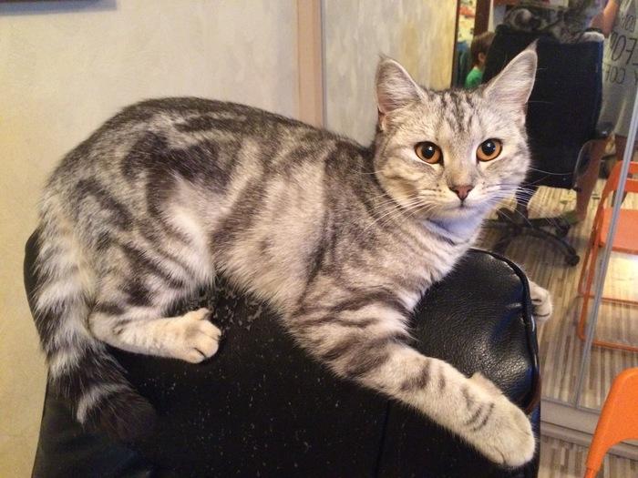 Пропала кошка. Москва. Помогите, пожалуйста, найти. Без рейтинга, Потерялась кошка в Москве, Помогите найти, Кот, Москва, Помощь животным, Потерялся кот