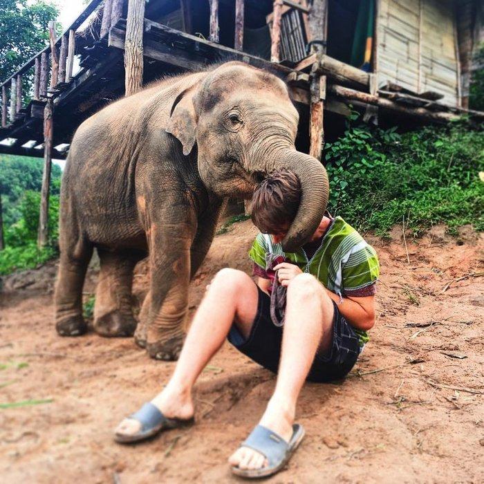 Слоны считают людей милыми, как щенят