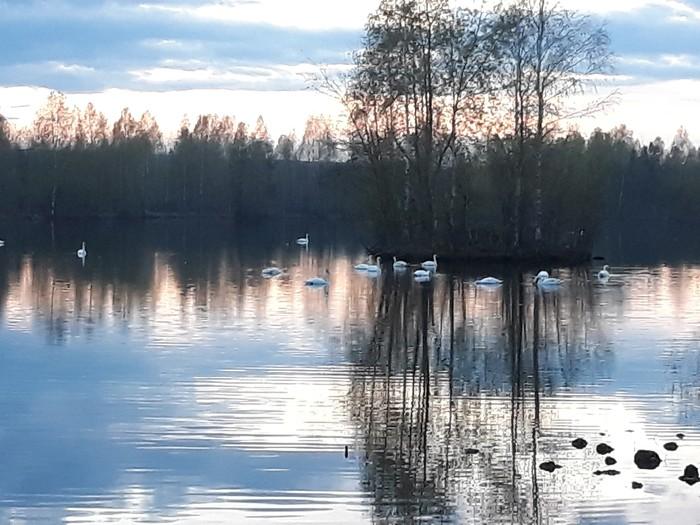 Вечерняя прогулка Фотография, Лебединое озеро, Вечер пятницы, Вода, Зеркало, Длиннопост
