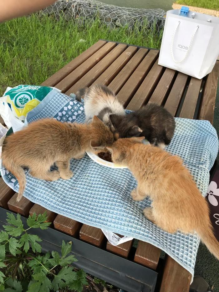 Котята ищут дом Котята, Животные, Длиннопост, Без рейтинга, Химки, Москва, Московская область