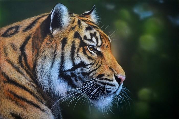 Тигр. Аэрография Аэрография, Рисунок, Длиннопост, Тигр, Большие кошки, Животные, Анималистика, Фотореализм, Этапы